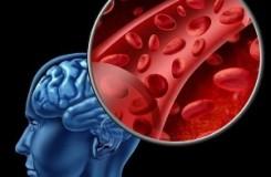 Какие травы улучшают мозговое кровообращение — 12 самых эффективных