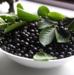 Как черноплодная рябина влияет на кровь — сгущает её или разжижает?
