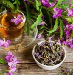 Влияние иван-чая на кровь — разжижает ли он её или сгущает?