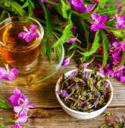 Как иван-чай влияет на артериальное давление – повышает или понижает?
