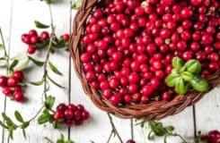 Помогает ли клюква повысить гемоглобин + 5 других полезных свойств