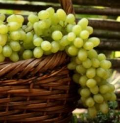 Какое влияние оказывает виноград на кровь – разжижает или сгущает её?