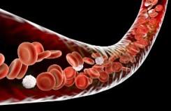 Топ-5 лекарственных трав, повышающих гемоглобин в крови человека