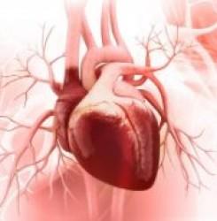 Список из 11 наиболее полезных лечебных трав для укрепления сердца
