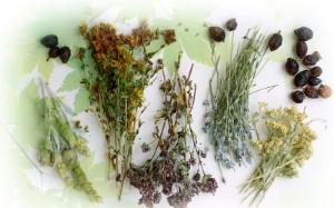 Какие травы лечат сердце