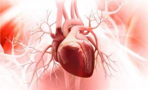 Травы при гипертонии и болезнях сердца